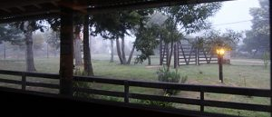 view through window towards front yard of house at dawn