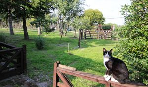 cat on fence in front yard, Uruguay